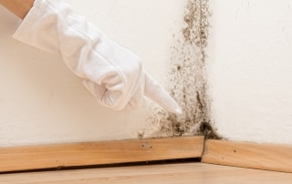 mold cleanup and removal
