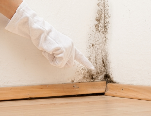 Black Mold: What You Need to Know Now