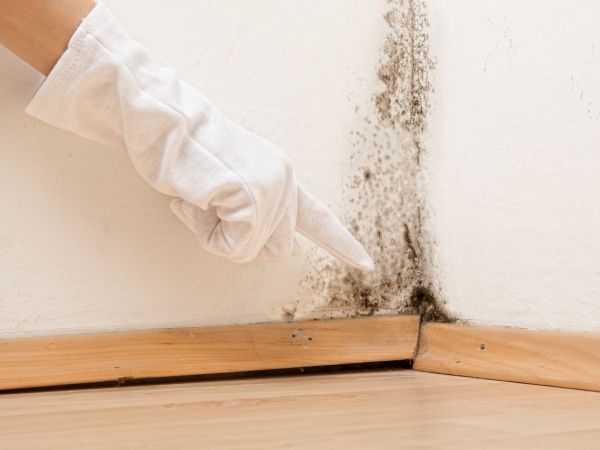 black mold, mold cleanup and removal