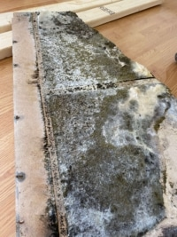 Mold Inspection Discovers Mold On Drywall